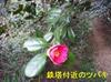 P2220145_2